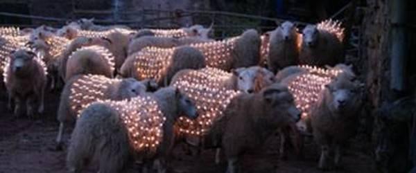pecore-led